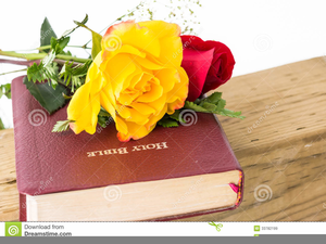 Bible and rose clipart free vector transparent download Free Clipart Of Holy Bible   Free Images at Clker.com - vector clip ... vector transparent download