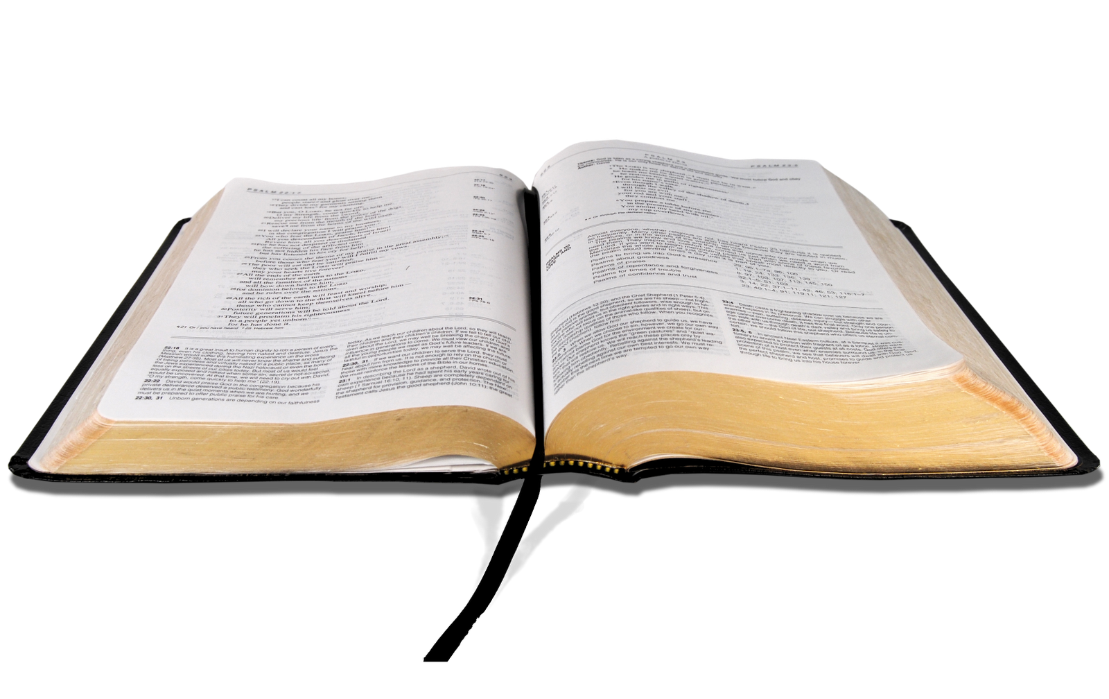 Bible book clipart banner free stock Bible Transparent PNG Pictures - Free Icons and PNG Backgrounds banner free stock