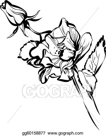 Big and small clipart black and white picture Vector Art - Big and small rose buds. Clipart Drawing gg60158877 ... picture