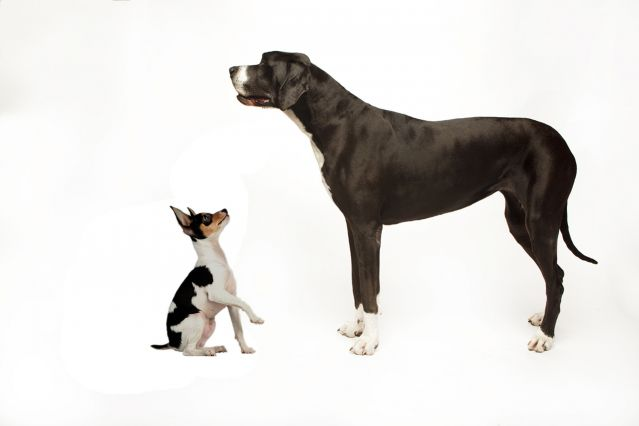 Big and small dog clipart black and white library Behavior Differences Between Smaller and Larger Dogs | Psychology ... black and white library
