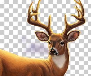 Big buck bunny clipart transparent Big Buck Hunter PNG Images, Big Buck Hunter Clipart Free Download transparent