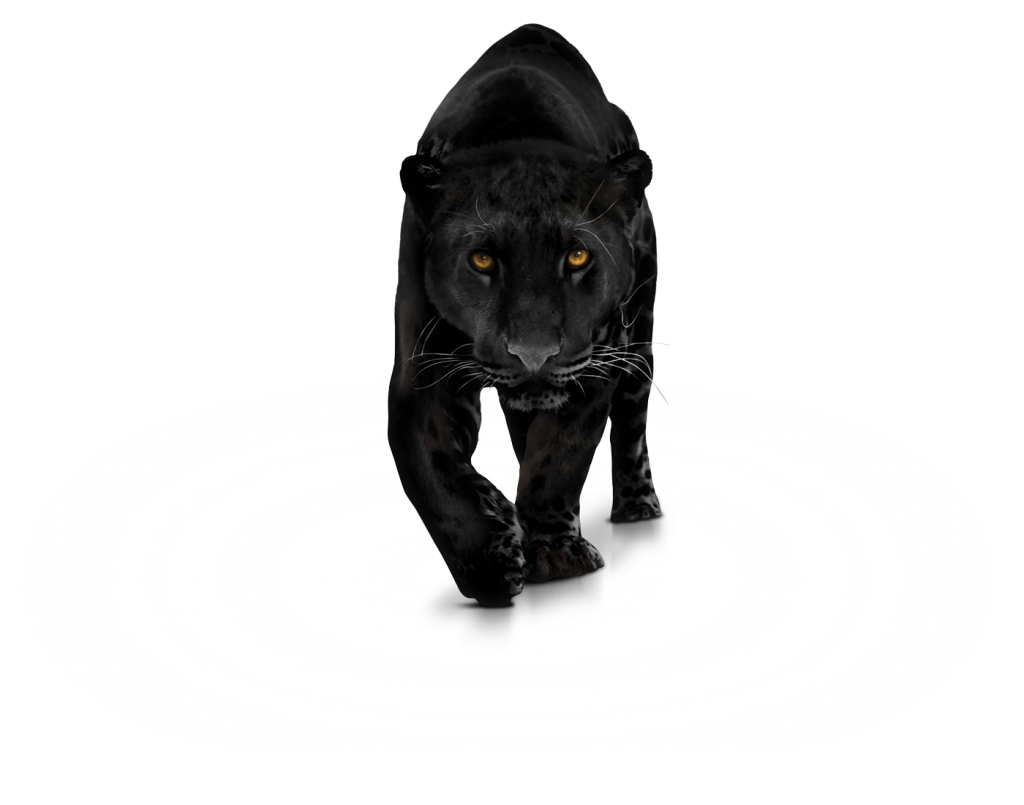 Big cat black and white clipart png transparent library Black panther Computer Icons Clip art - black panther 1024*805 ... png transparent library