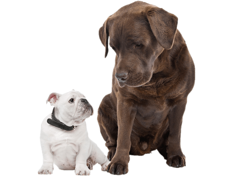Big dog and little dog clipart clipart black and white Images of Big And Small Dogs - #SpaceHero clipart black and white