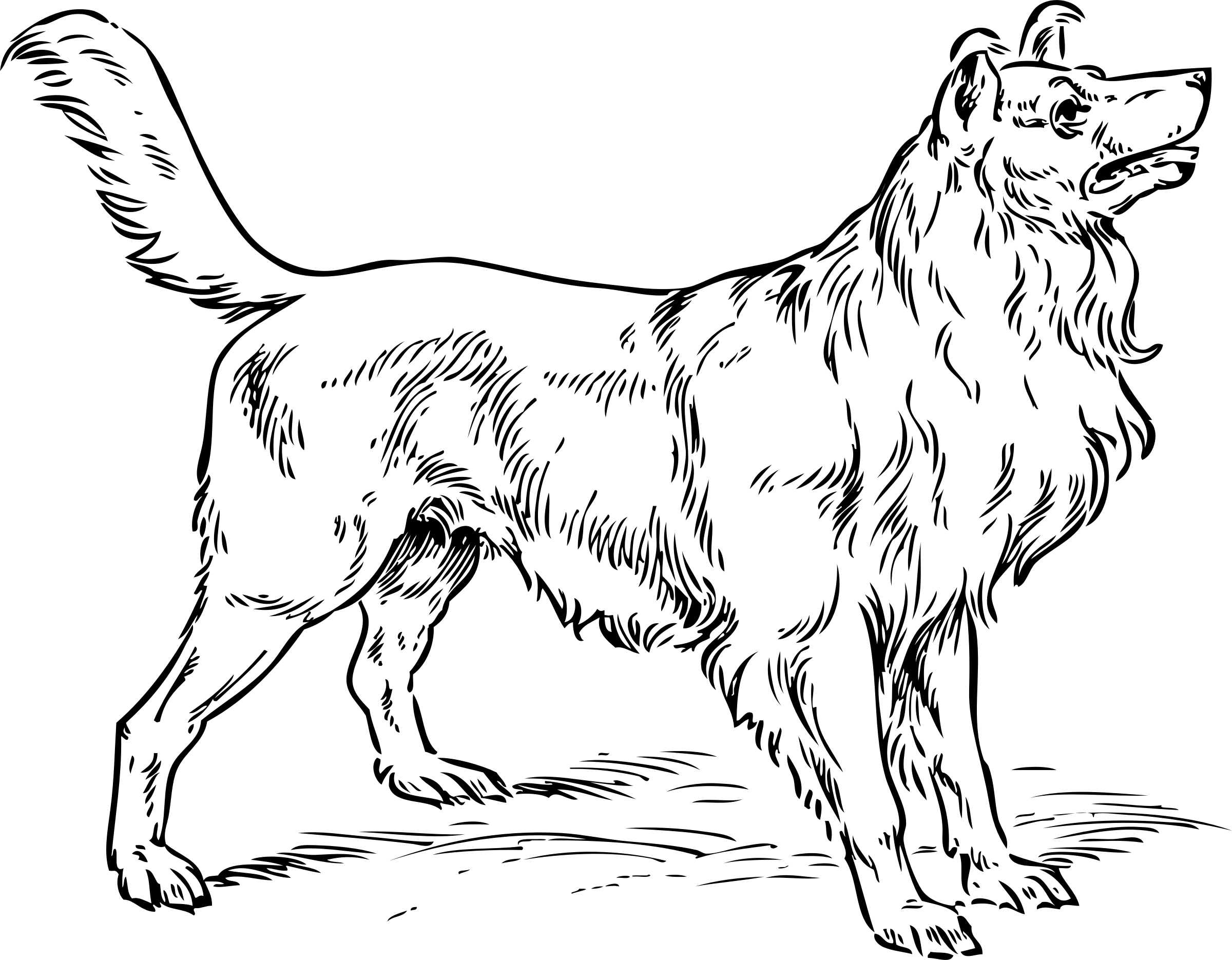 Husky dog clipart black and white svg free download 15 Dog clip art big dog for free download on mbtskoudsalg svg free download