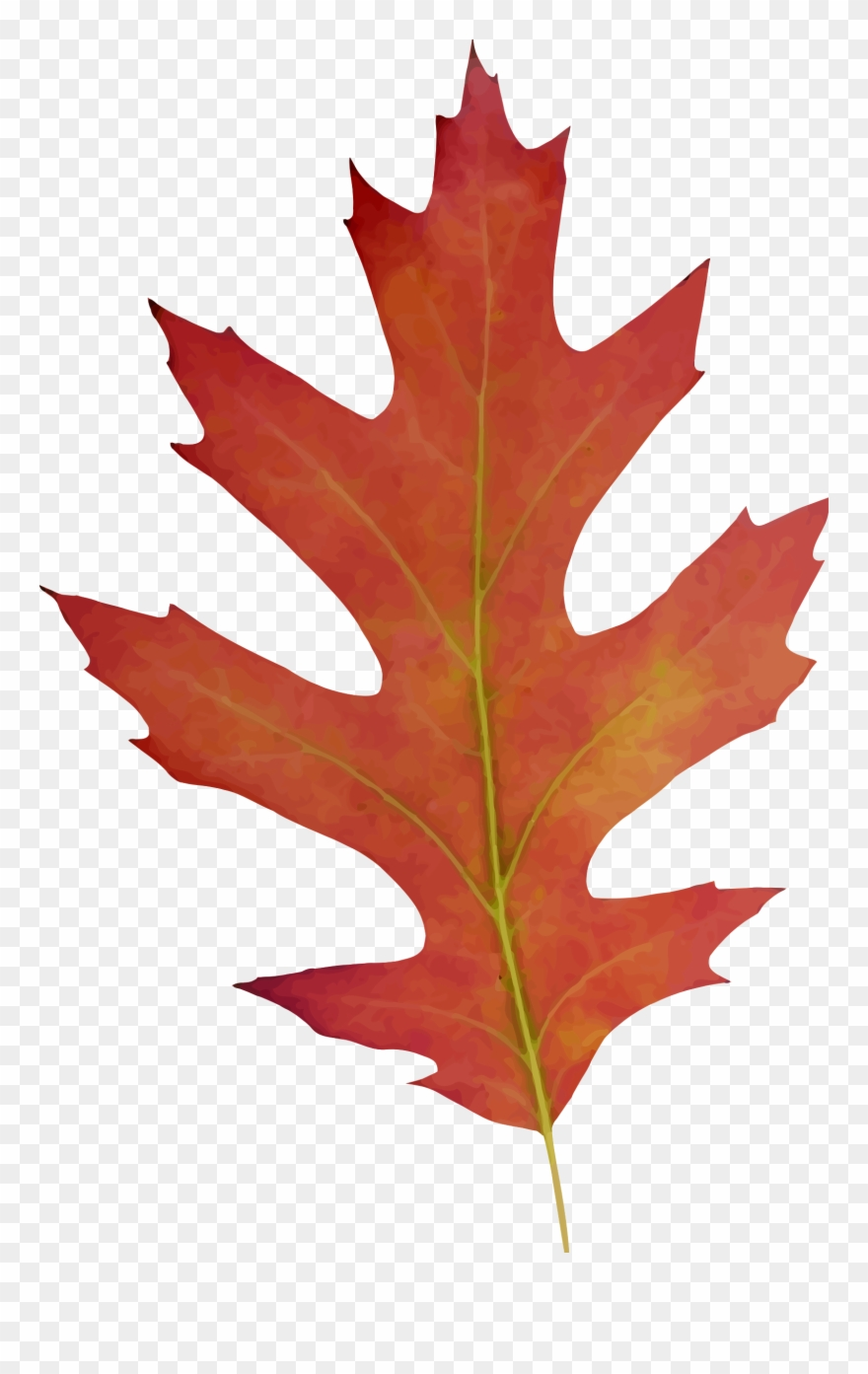 Big fall leaf clipart picture free library Big Image - Oak Leaf Fall Drawing Clipart (#2702) - PinClipart picture free library