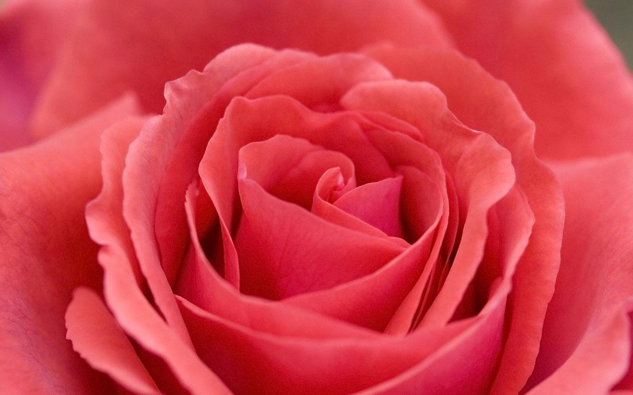 Big images of flowers jpg download Big flower images - ClipartFest jpg download
