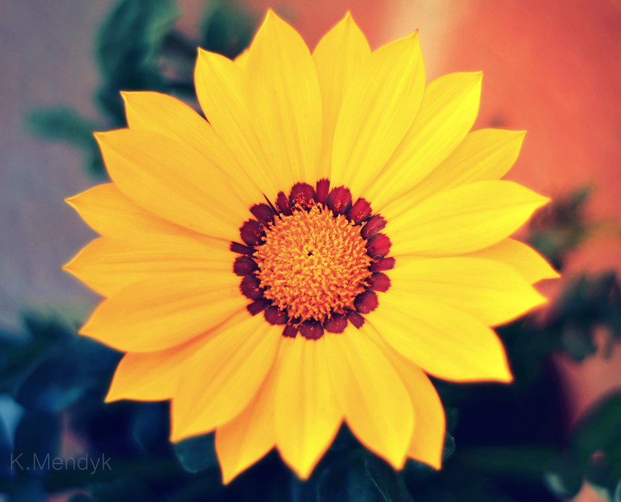 Big images of flowers picture royalty free a big flowers by Clariette on DeviantArt picture royalty free