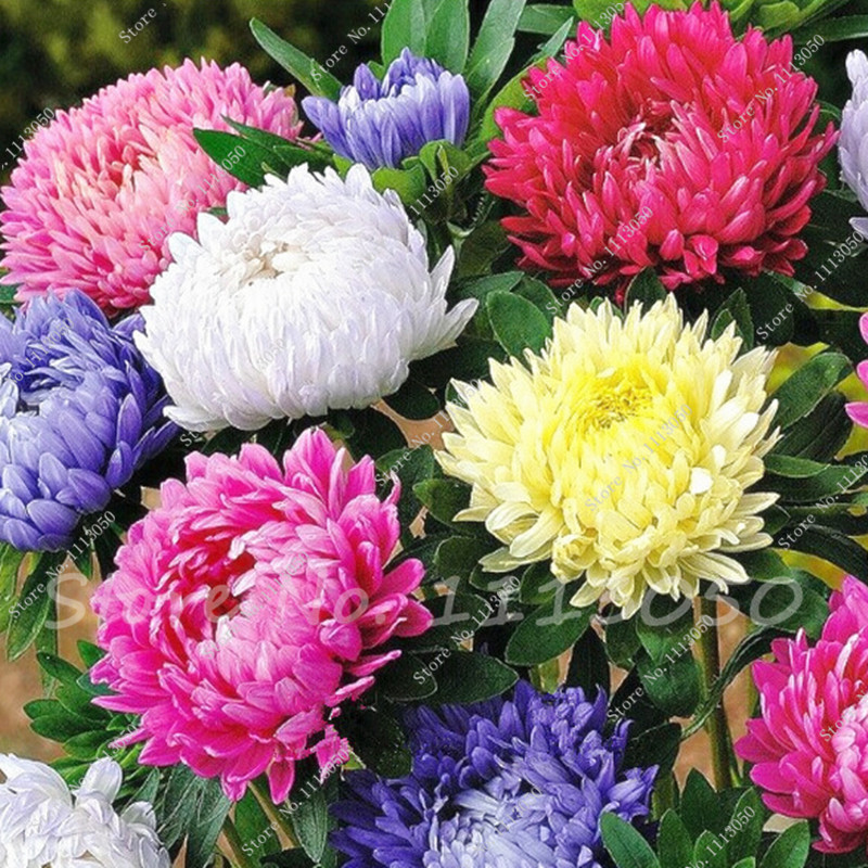 Big images of flowers picture transparent download Popular Flowers Free-Buy Cheap Flowers Free lots from China ... picture transparent download