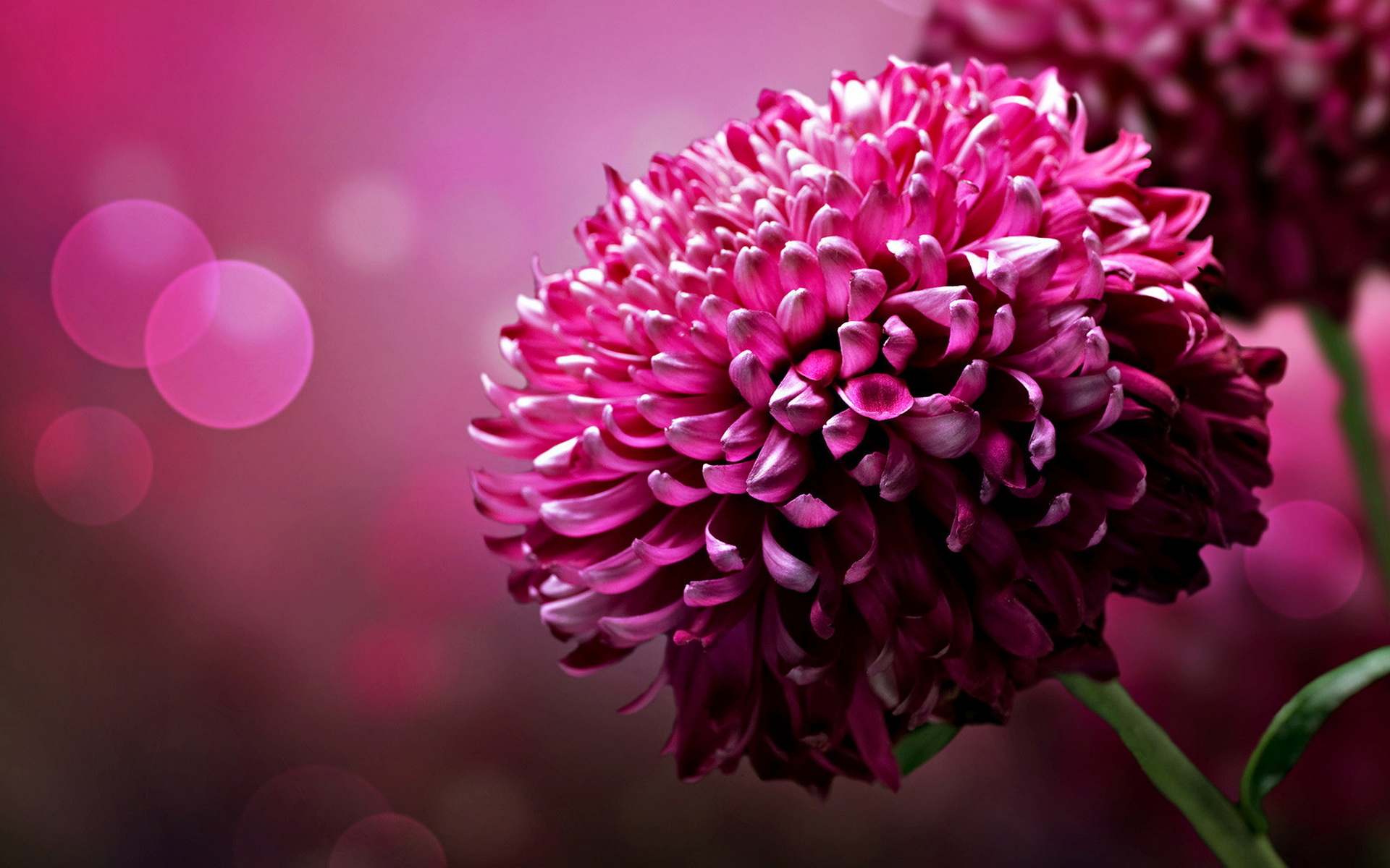 Big images of flowers. Large clipartfest flower wallpapers