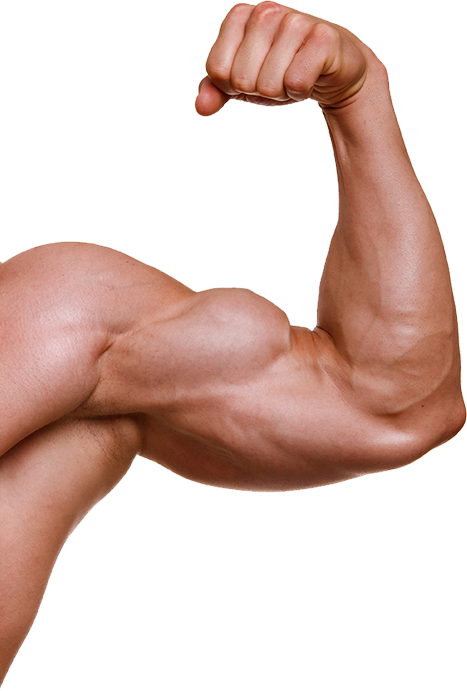 Muscle Arm Png, png collections at sccpre.cat banner transparent library