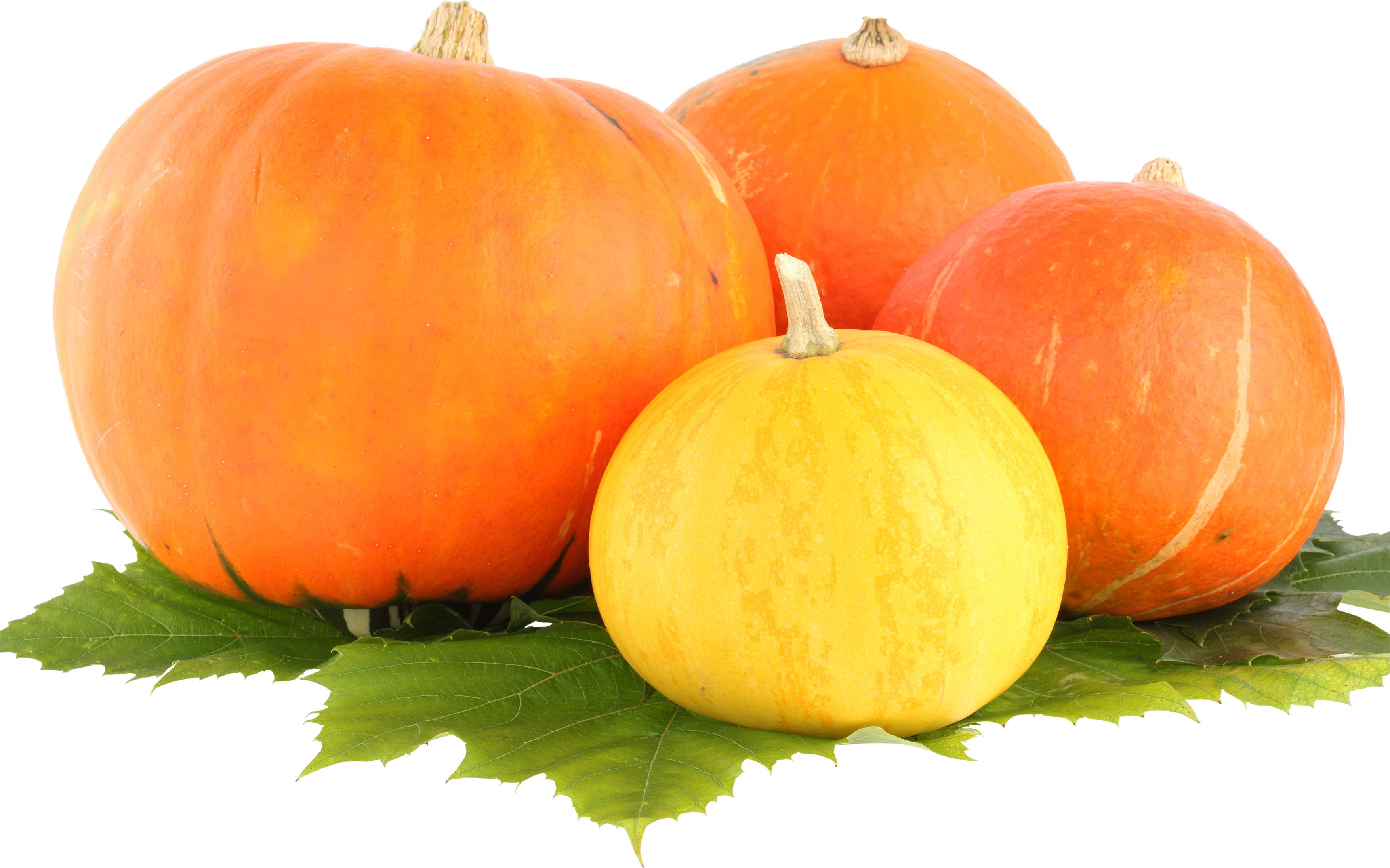Free clipart of th big pumpkin picture download Pumpkin PNG images free download picture download