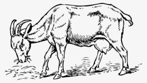 Billy goat clipart eating grass transparent library Grass Drawing PNG Images | PNG Cliparts Free Download on SeekPNG transparent library