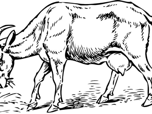 Billy goat clipart eating grass picture black and white library Goat Clipart Balck White - Goat Eating Grass Drawing , Transparent ... picture black and white library