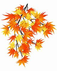 Autumn leaves bing clipart png free library Best Fall Leaves Border - ideas and images on Bing | Find what you ... png free library