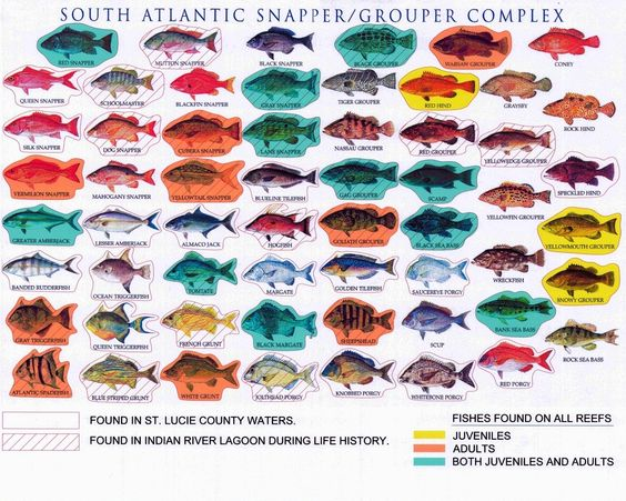 Bing clipart search history. All saltwater fish images