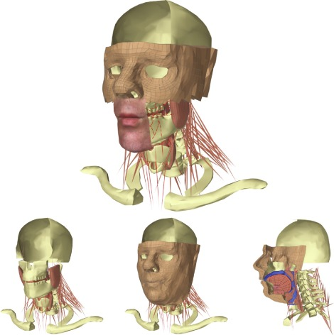 FRANK: A Hybrid 3D Biomechanical Model of the Head and Neck ... svg