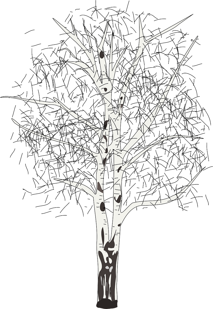 Birch tree clipart black and white picture library stock How to draw a birch tree: step-by-step lessons, free printable ... picture library stock