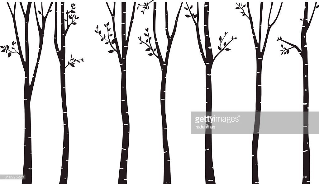 Birch tree silhouette clipart svg transparent Vector Art : Birch Tree Silhouette Background | Emery\'s room | Tree ... svg transparent