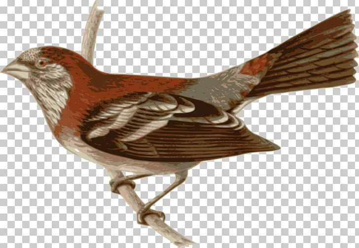 Bird Three-banded Rosefinch Passerine Feather Wren PNG, Clipart ... png free library