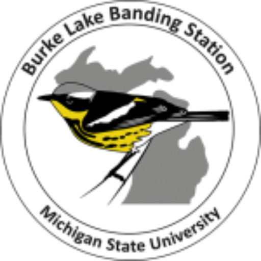 Bird banding clipart royalty free stock Michigan State Bird Observatory – Connecting people of all ages with ... royalty free stock