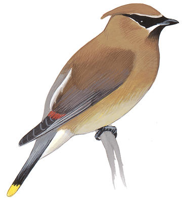 Bird banding clipart vector freeuse Bird-Banding Training | Audubon Vermont vector freeuse