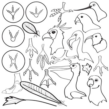 Bird beaks and feet clipart clip transparent stock Bird Clip Art ( Adaptations ) - Beaks, Feathers & Feet - 47 piece Set clip transparent stock