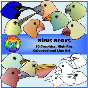 Bird beaks and feet clipart graphic transparent library Birds Adaptations Clipart (Beaks and Feet) graphic transparent library