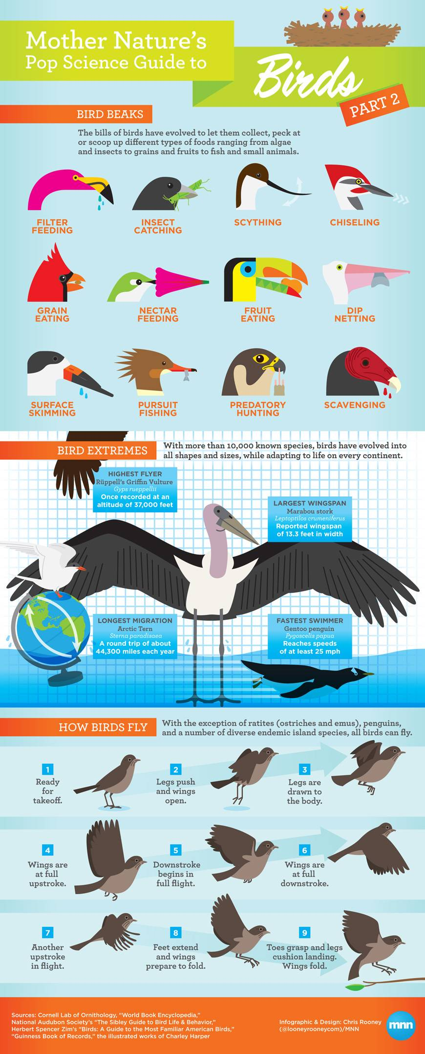Bird beaks and feet clipart clipart library download Infographic: Mother Nature\'s Pop Science Guide to Birds, Part 2 ... clipart library download