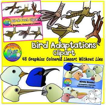 Bird beaks and feet clipart png transparent Birds Adaptations Clipart (Beaks and Feet) | Birds Teaching Unit ... png transparent