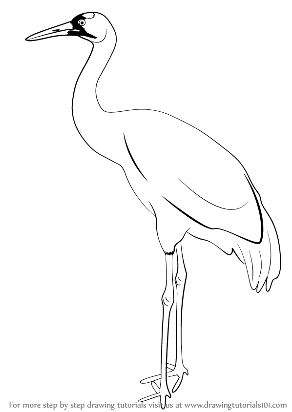 Crane bird clipart clip art black and white Learn How to Draw a Crane (Birds) Step by Step : Drawing Tutorials ... clip art black and white