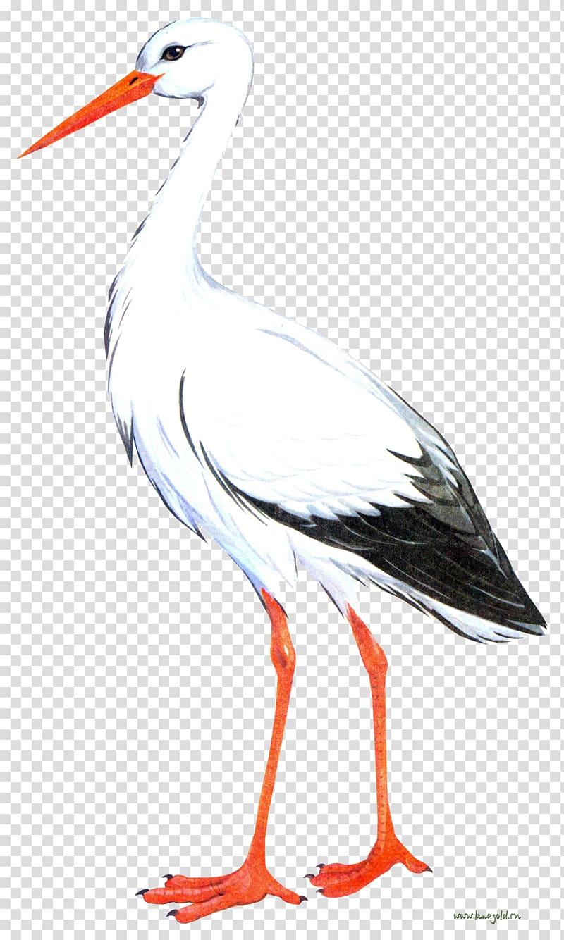 Bird crane clipart svg black and white library White stork Bird Crane, Stork transparent background PNG clipart ... svg black and white library