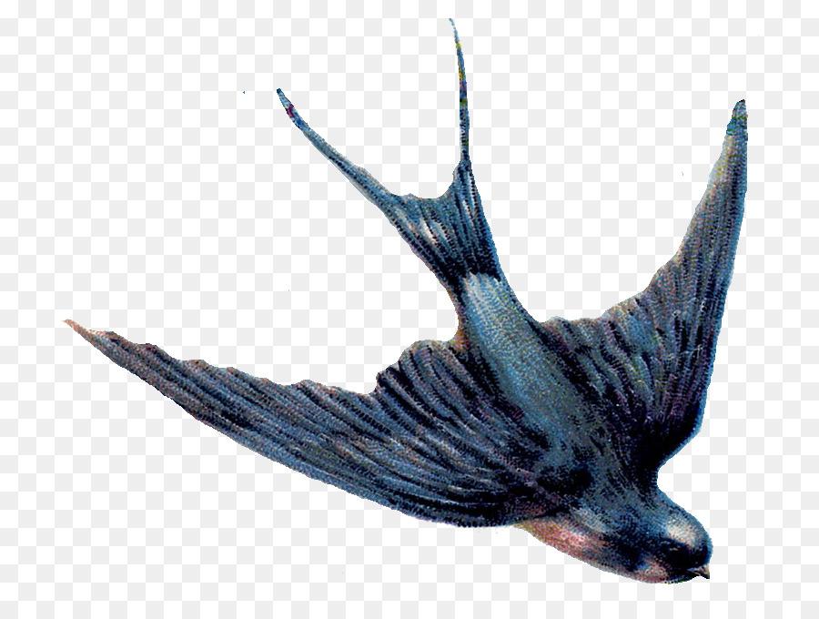 Bird diving clipart transparent library Swallow Bird clipart - Bird, Fish, Feather, transparent clip art transparent library