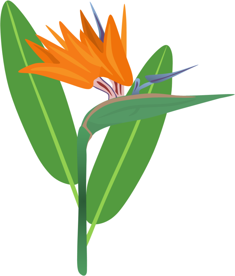Bird flower clipart graphic library download Bird of Paradise Flower by AdamZT2 on DeviantArt graphic library download
