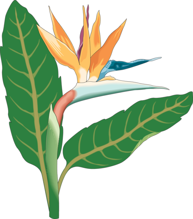 Bird flower clipart clip art stock 28+ Collection of Bird Of Paradise Clipart | High quality, free ... clip art stock