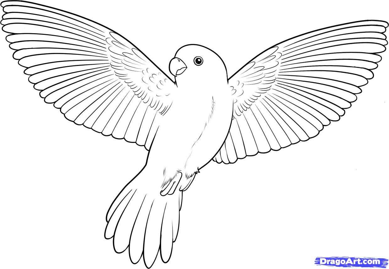 How to Draw a Flying Bird, How to Draw a Bird, Step by Step, Birds ... clip art royalty free stock