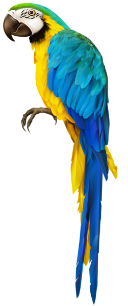 Parrot Transparent Clip Art Image | lamp | Parrot painting, Bird ... picture free stock