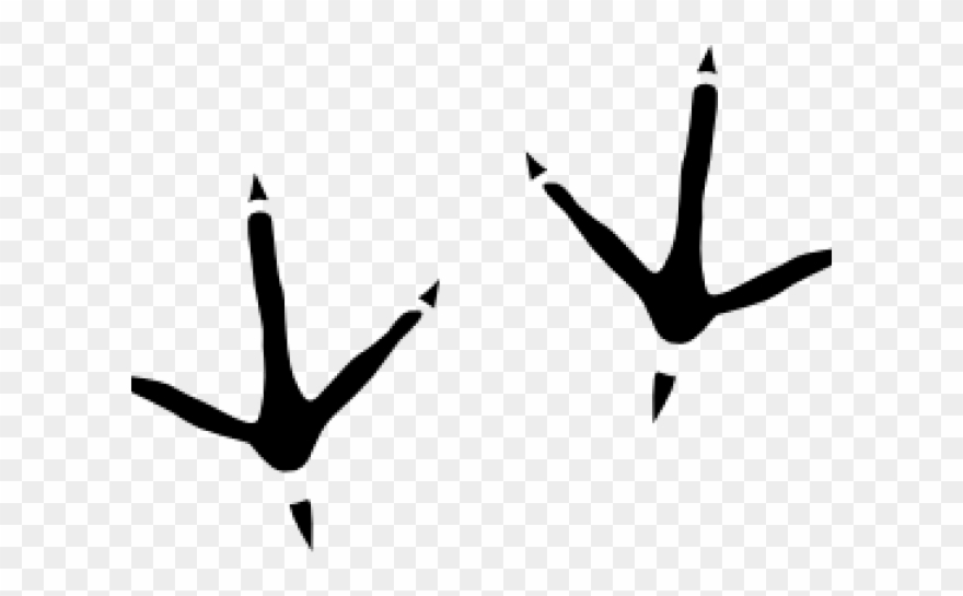 Bird foot print clipart png royalty free stock Footprint Clipart Bird - Bird Footprints - Png Download (#2199440 ... png royalty free stock