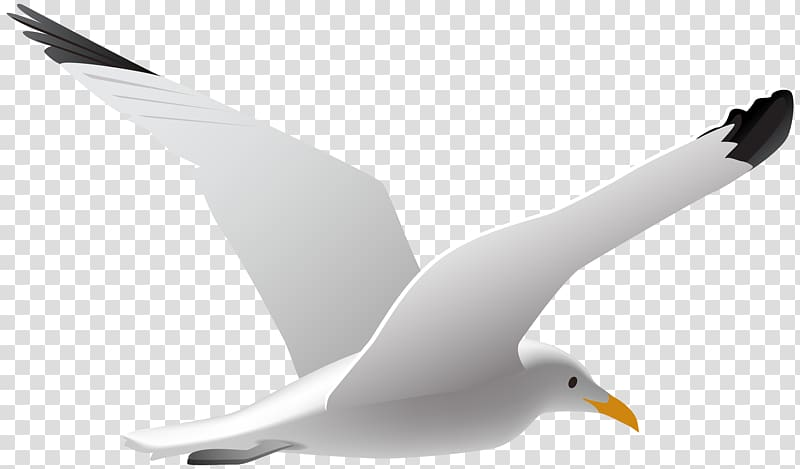 Bird in a curve clipart picture black and white White seagull , Gulls Bird , Seagull transparent background PNG ... picture black and white