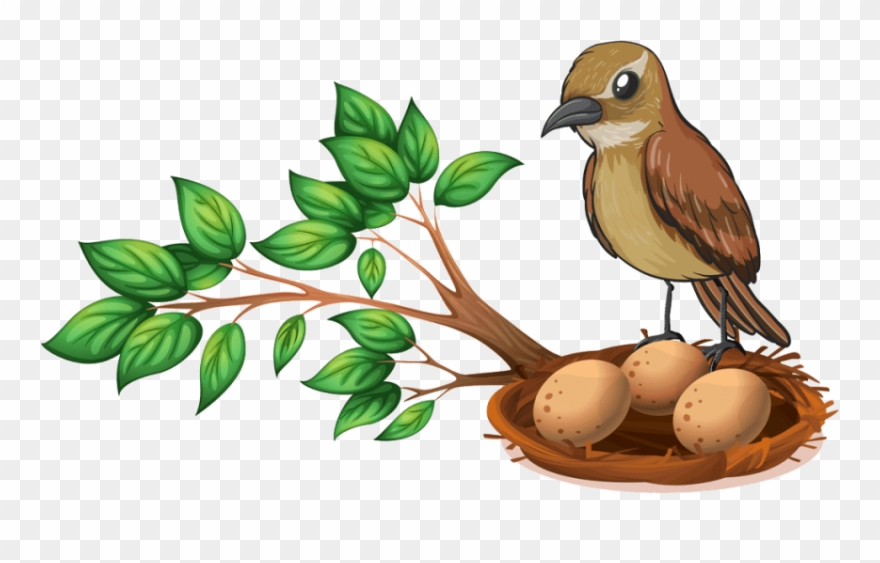 Free Png Download Bird Nest On Tree Png Images Background Clipart ... graphic royalty free download