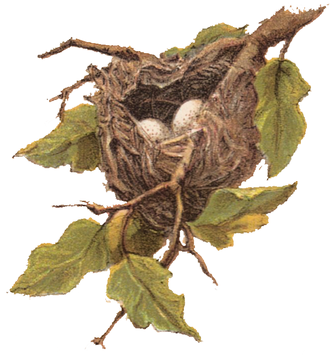 Bird nest in tree clipart picture transparent stock Free Vintage Clip Art - Nest with Eggs - The Graphics Fairy picture transparent stock