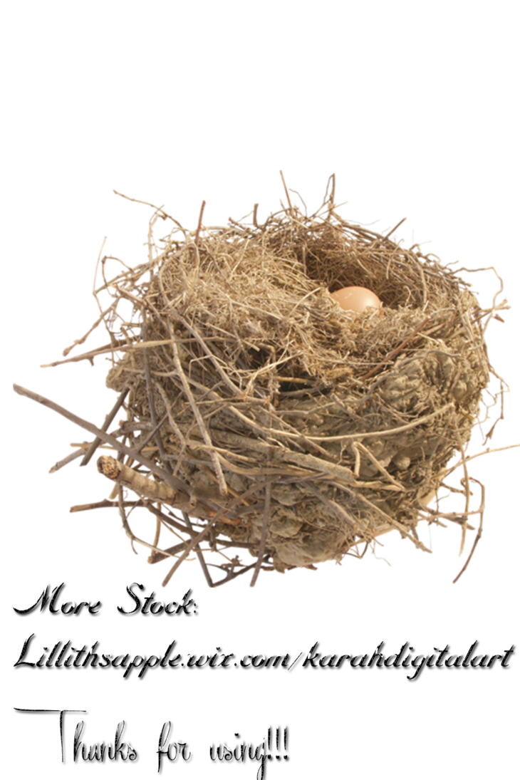 Bird nest in tree clipart picture free download Nest Stock Png by KarahRobinson-Art on DeviantArt picture free download
