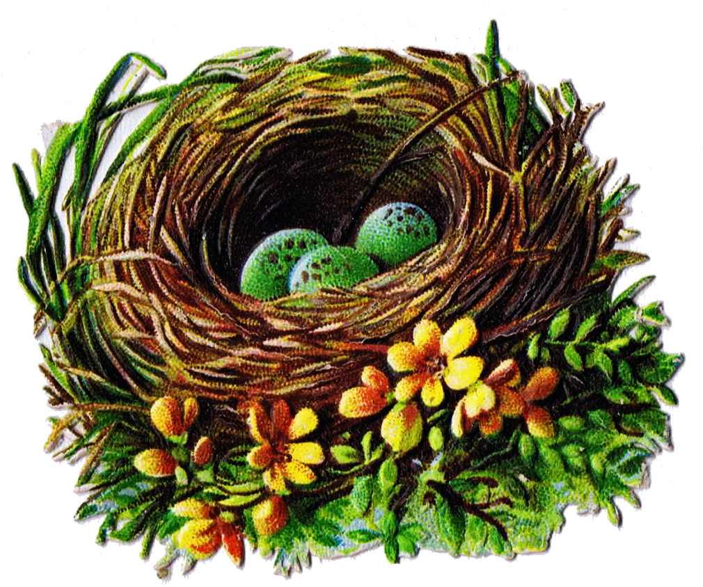 Bird nest in tree clipart graphic royalty free download Bird Nest and Egg Graphics - 5 Antique Die Cut Images | Pinterest ... graphic royalty free download