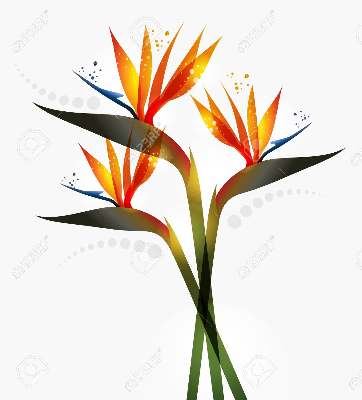 Bird of paradise clipart jpg freeuse library Bird of paradise clipart 7 » Clipart Station jpg freeuse library