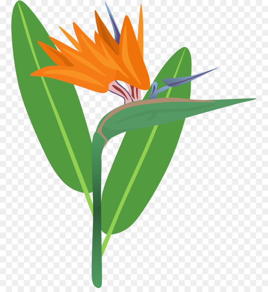 Bird of paradise clipart vector library stock Bird Of Paradise clipart - Bird, Flower, Plant, transparent clip art vector library stock