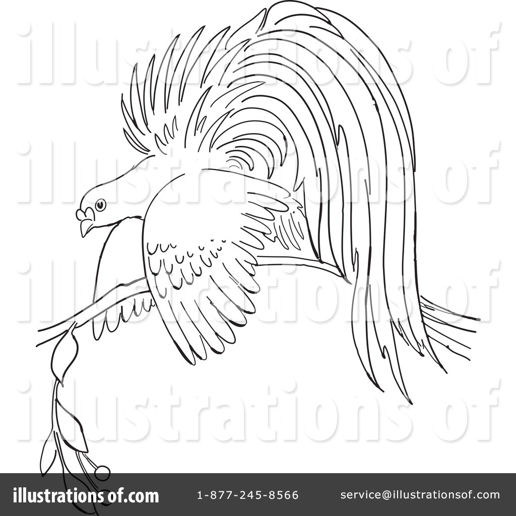 Bird of paradise clipart black and white clip art library download Bird Of Paradise Clipart #1127761 - Illustration by Picsburg clip art library download