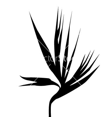 Bird of paradise clipart black and white image transparent download Birds of paradise flower silhouette vector by SamiVector - Image ... image transparent download