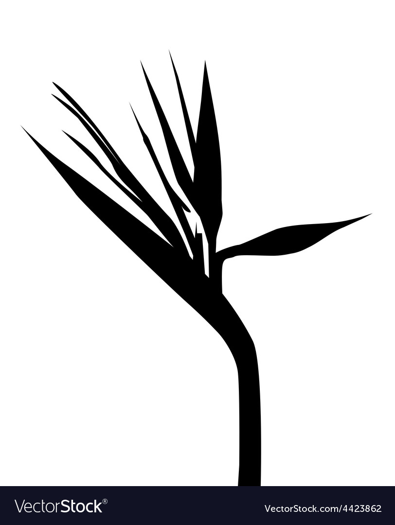 Bird of paradise clipart black and white transparent stock Birds of paradise Silhouette transparent stock