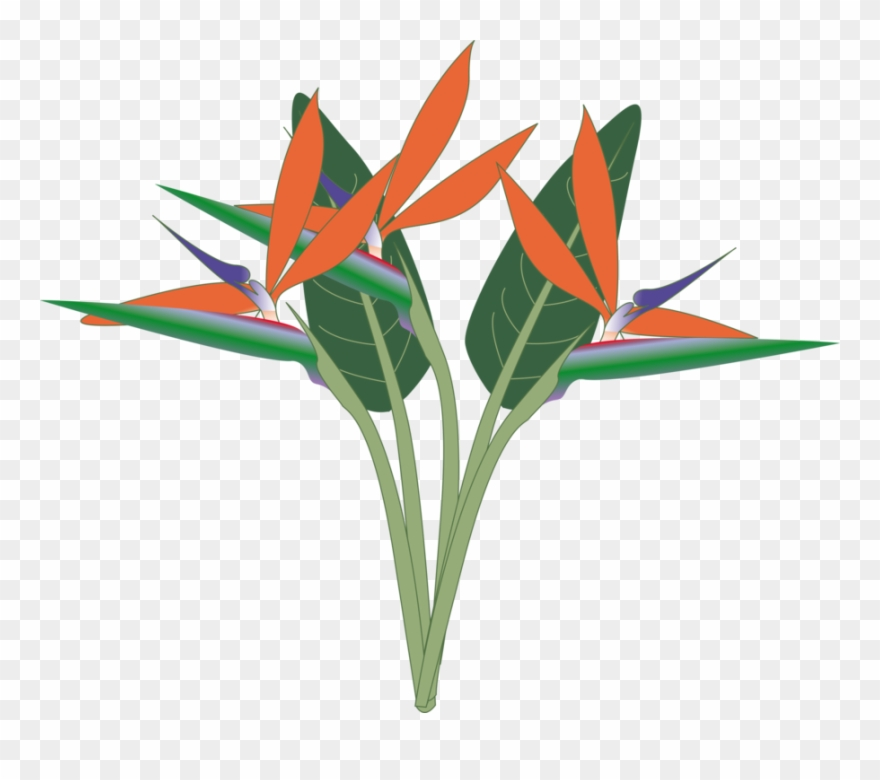 Bird of paradise clipart png library download Paradise - Bird Of Paradise Svg Clipart (#68340) - PinClipart png library download