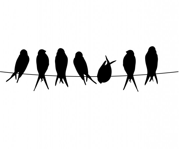 Birds on a wire clipart jpg freeuse stock Birds On A Wire Free Stock Photo - Public Domain Pictures jpg freeuse stock