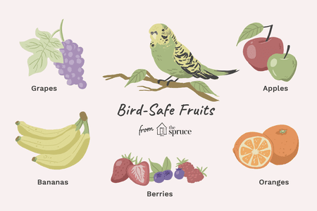 Birds eating seeds farm clipart image freeuse Safe Fruits for Birds image freeuse
